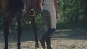 Il cavaliere in un vestito bianco conduce il cavallo dalle redini Cavaliere femminile archivi video