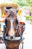 Il cavallo è coperto di occhi fotografia stock