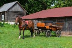 Il cavallo è preparato per le passeggiate del cavallo nel parco Fotografie Stock Libere da Diritti