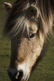 Il cavallo fotografie stock