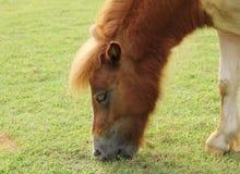 Il cavallo Fotografia Stock