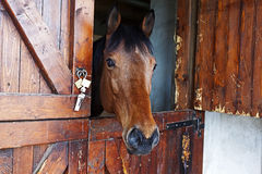 Il cavallo 3 Fotografie Stock Libere da Diritti