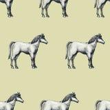 Il cavallo, annata ha inciso il modello senza cuciture di vettore Può essere l'uso per i negozi ed i mercati di alimento biologic Fotografia Stock