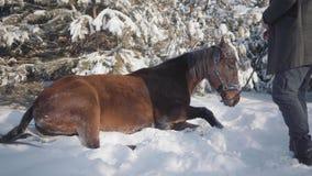 Il cavallo cade sulla neve Il proprietario del cavallo sta stando vicino tenente le redini stock footage