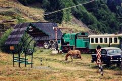 Il cavallo che pasce nel museo Fotografia Stock Libera da Diritti
