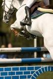 Il cavallo che salta 015 Immagine Stock