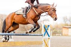 Il cavallo con il cavaliere salta sopra la transenna sul salto di manifestazione Immagini Stock
