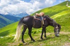 Il cavallo con la sella pasce in montagne il giorno di estate luminoso e soleggiato il cavallo mangia l'erba verde sulla collina fotografia stock