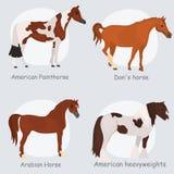 Il cavallo cresce icone piane di colore messe Fotografie Stock