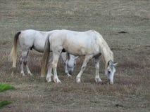 IL-cavallo stockfotografie