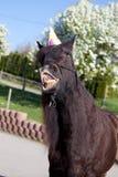 Il cavallo divertente con il cappello del partito celebra il suo compleanno Fotografia Stock