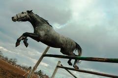 Il cavallo drammatico salta Fotografia Stock