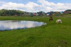 Il cavallo e la mucca pascono in un prato vicino al villaggio Fotografia Stock Libera da Diritti