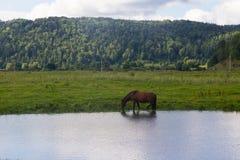 Il cavallo e la mucca pascono in un prato vicino al villaggio Fotografia Stock