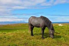 Il cavallo grigio Immagine Stock