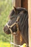 Il cavallo guarda fuori Immagine Stock