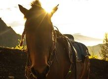Horse2 Fotografia Stock