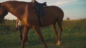 Il cavallo mastica l'erba sul campo archivi video