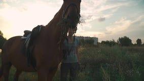 Il cavallo mastica l'erba sul campo video d archivio