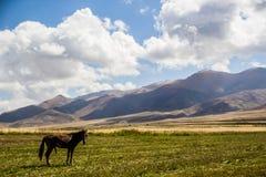 Il cavallo nell'area selvaggia di bello Kirgizstan Fotografia Stock Libera da Diritti