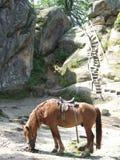 Il cavallo nelle montagne Fotografie Stock Libere da Diritti