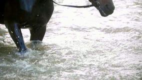 Il cavallo nero batte i piedi il suo zoccolo sul fiume e spruzza l'acqua archivi video