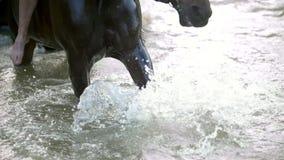 Il cavallo nero batte i piedi il suo zoccolo sul fiume e spruzza l'acqua video d archivio