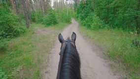 Il cavallo nero che cammina sulla via in foresta scuote la sua criniera archivi video