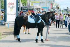 Il cavallo nero sta sulla via Fotografie Stock Libere da Diritti