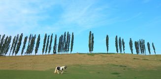 Il cavallo pasce sul terreno coltivabile Fotografia Stock