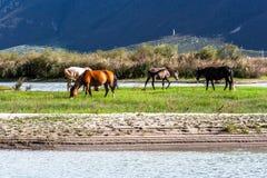 Il cavallo in prati libera il funzionamento Fotografia Stock