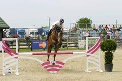 Il cavallo salta Fotografie Stock