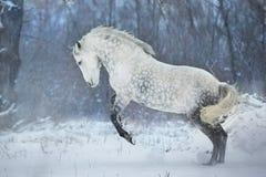 Il cavallo salta il divertimento fotografia stock libera da diritti