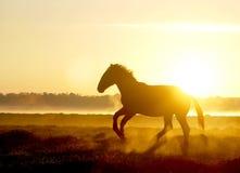 Il cavallo salta sul tramonto nella nebbia Fotografia Stock Libera da Diritti