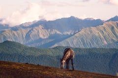 Il cavallo selvaggio e la bella montagna abbelliscono in Svaneti, la Georgia Fotografia Stock Libera da Diritti