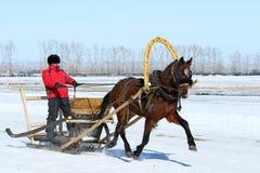 Il cavallo sfruttato in slitta Fotografia Stock