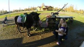 Il cavallo sta mordendo il braccio del bambino, pensante che sia alimento stock footage