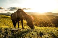Il cavallo sul prato immagine stock libera da diritti