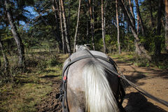 Il cavallo tira un carretto attraverso una foresta Immagine Stock