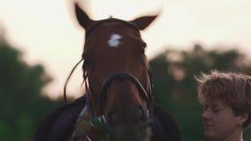 Il cavallo torce la sua testa divertente stock footage