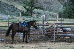 Il cavallo tradizionale del nomade mongolo sta accanto ad una penna di legno fotografia stock