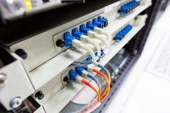 Il cavo a fibre ottiche si collega al commutatore di Ethernet Immagini Stock