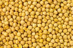 Il cece semina il fondo o l'alimento crudo di struttura Immagini Stock