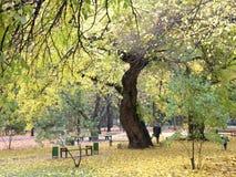 Il Central Park di Chisinau Fotografia Stock Libera da Diritti