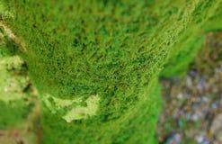 Il centro del fuoco di struttura di verde di muschio del tronco di albero ha offuscato il fondo con lo spase della copia, eco bas fotografie stock