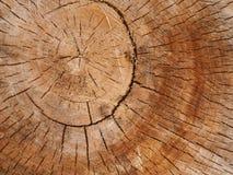Il centro della quercia fotografia stock