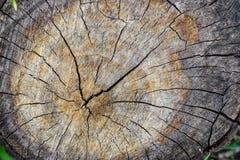 Il ceppo dell'albero ha abbattuto, sezione del tronco Fondo dal ceppo di un albero abbattuto immagini stock