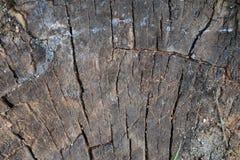 Il ceppo dell'albero ha abbattuto, sezione del tronco Fondo dal ceppo di un albero abbattuto immagine stock libera da diritti