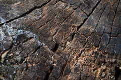 Il ceppo dell'albero ha abbattuto, sezione del tronco Fondo dal ceppo di un albero abbattuto immagini stock libere da diritti