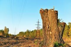 Il ceppo dell'albero segato nel processo di elettrificazione immagine stock libera da diritti